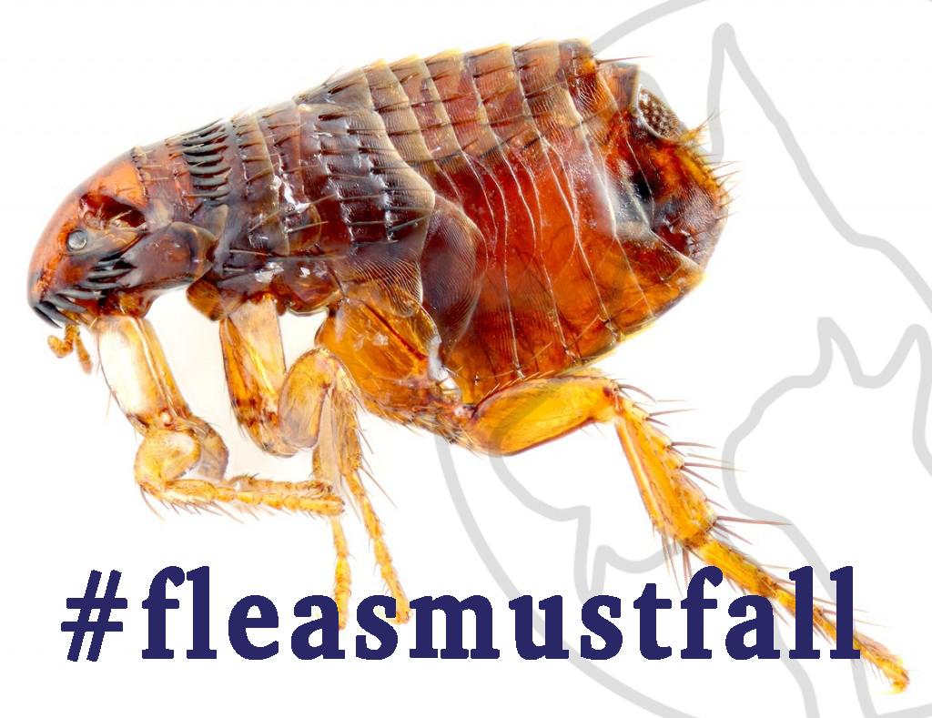 #fleasmustfall